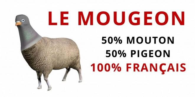 De la fiscalité abusive, naissent les moutons enragés